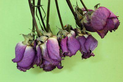 faire sécher les bourgeons de rose entier