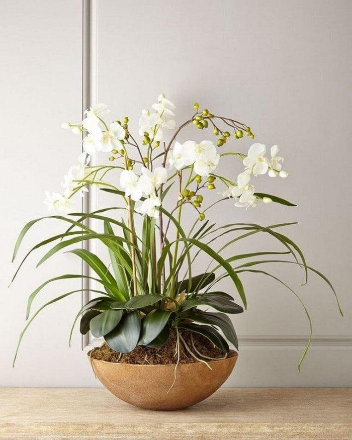 10 plantes qui attirent les énergies positives dans un intérieur